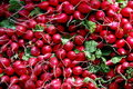 NYC: Radishes at Farmer's Market Stock Photo