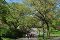 Nyc riverside park in spring comes to with colourful flowering trees and stately elms with new greenery Stock Photo