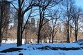 NYC SKyScrapers behind trees in Central Park Royalty Free Stock Photo