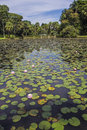 Nymphaea botanical garden sao paulo brazil in the of in Royalty Free Stock Images