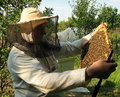 image photo : The beekeeper and  framework with bees