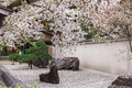 O estilo japonês do jardim do zen decora pelas flores de cerejeira cor de rosa Fotos de Stock