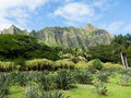 Oahu pali mountain landscape of a in Royalty Free Stock Photography