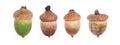 Oak acorn on a white background. Collage. Macro. Royalty Free Stock Photo
