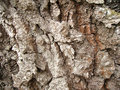 Oak bark Stock Images