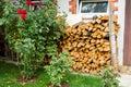 Oak firewood chopped