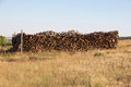 Oak firewood Cut and Stacked in the Bush Royalty Free Stock Photo