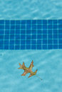 Oak Leaf Floating in Pool Royalty Free Stock Photo