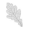 Oak leaf skeleton Royalty Free Stock Photo