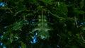 Oak leafs Royalty Free Stock Photo