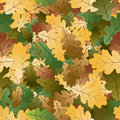 Oak leafs seamless pattern Stock Photography