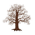 Oak without leaves on a white background detached tree Royalty Free Stock Photography