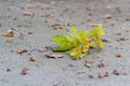 Oak limb and acorns on the ground Royalty Free Stock Photos