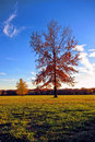 Oak and Maple Trees in Fall Color in a Park Royalty Free Stock Photography