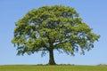 Oak Shelter Royalty Free Stock Image