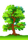 Oak tree Royalty Free Stock Photos