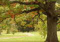 Oak tree in an autumn setting Stock Photos