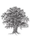Oak tree black and white with leaves drawn with illustrators brushes and gradient mesh Royalty Free Stock Images