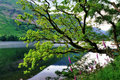 Oak Tree and Foxgloves by a Lake Stock Photo