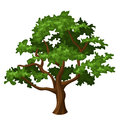 Oak tree illustration of isolated on a white background Royalty Free Stock Photo