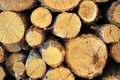 Oak tree lumber Royalty Free Stock Photo