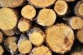 Oak tree lumber Royalty Free Stock Photo