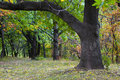 Oak tree at park Royalty Free Stock Photography