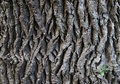 Oak tree texture Stock Images