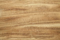 Oak tree texture Royalty Free Stock Photo