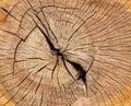 Oak tree texture close up Royalty Free Stock Photo