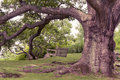 Oak tree toned image of large with a swing hanging from its limb Royalty Free Stock Image