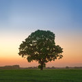 Oak Tree at Twilight Royalty Free Stock Photo