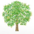 The oak tree on the white background. The illustration can be used as a logo and wallpaper.