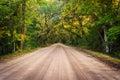 Oak trees along the dirt road to botany bay plantation on edisto island south carolina Royalty Free Stock Photos