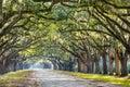 Oak trees in savannah georgia usa tree lined road at historic wormsloe plantation Stock Image