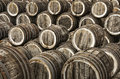 Oak wine casks Stock Photography