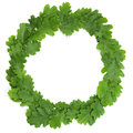 Oak wreath of leaves isolated on white latvian midsummer holiday symbol Stock Photos