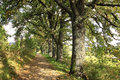 Oaks alley from the autumn mountains in southern czech Royalty Free Stock Photography