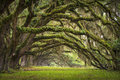 Oaks Avenue Charleston SC Plantation Live Oak Tree Stock Photography