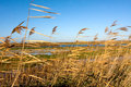 Oare marshes in Kent Royalty Free Stock Images