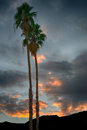 The oasis beautiful palm trees agains t a sunset sky Stock Image