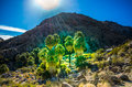 Oasis of Hope - Joshua Tree National Park - California Royalty Free Stock Photo