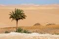 Oasis in Sahara desert in Egypt Royalty Free Stock Photo