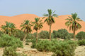 Oasis in Sahara Desert Royalty Free Stock Photo