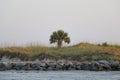 Oasis tropical on a coastal beach with a single palm tree Royalty Free Stock Photo