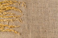 Oat cereal grain on sackcloth Royalty Free Stock Photo