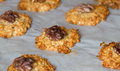 Oat cookies baked with a walnut Stock Image