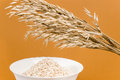Oat ears and oat flakes a bunch of a white bowl of finely ground isolated on light brown background Royalty Free Stock Image