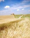 Oat Field in Tuscany Royalty Free Stock Photo