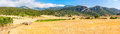 Oat fields in ports de besseit with mountains the background Stock Photo